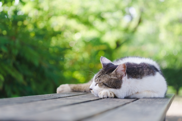【夢占い】猫の夢が表す意味とは?